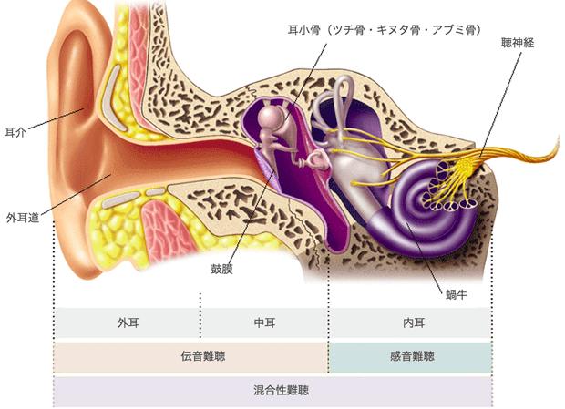 ear-01