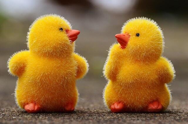 chicks-1159192_640