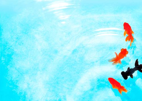 gold-fish_s