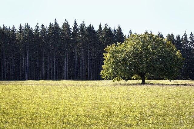 trees-1279452_640