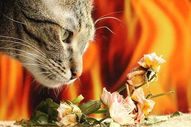 cat-1225760_640