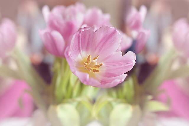 flowers-1338522_640