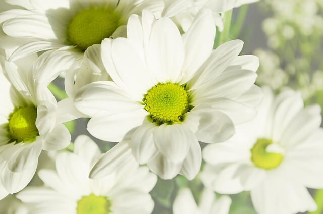 flowers-164860_640