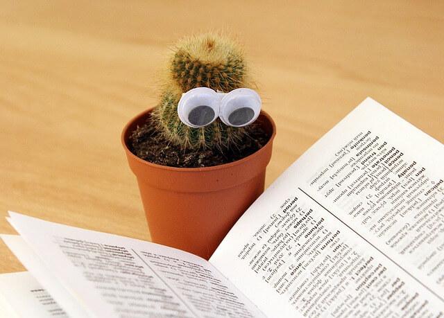 cactus-1059633_640