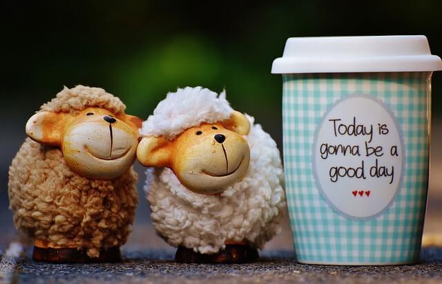 sheep-1644144_640