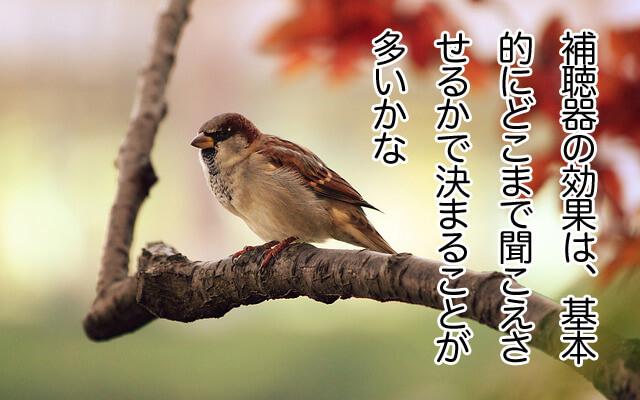 sparrow-9950_640